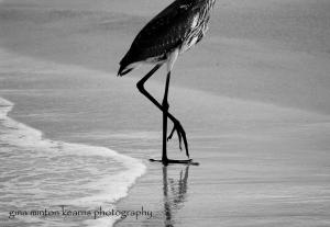 beach_birds-158-2
