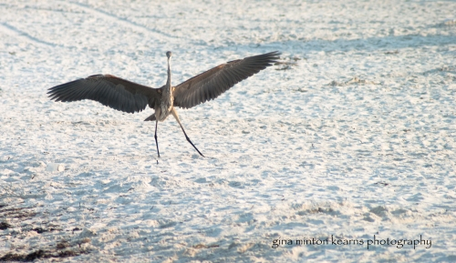 beach_birds-321