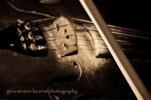 fiddlestrings