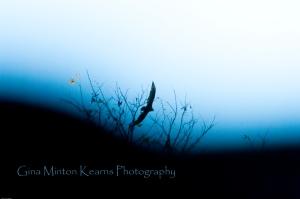 soaringhawk