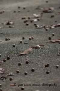 acornsandleaves