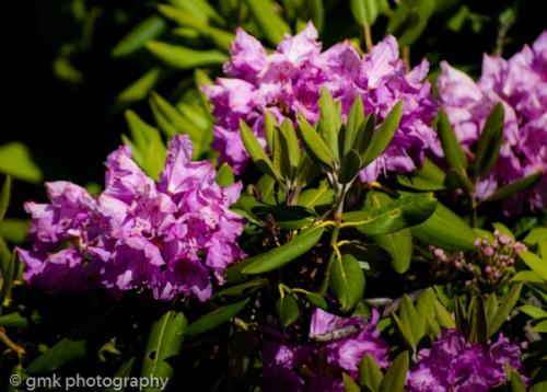 dogsflowersflagrockgoats-115