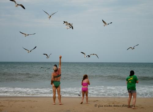 feedingthegulls